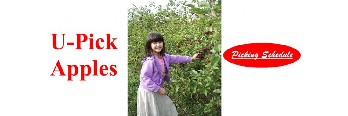 Orchard Walk 2020